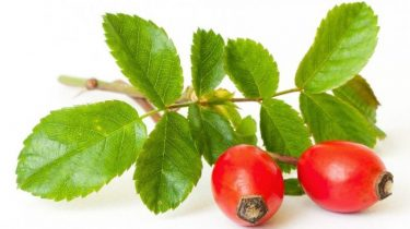 Ягоды шиповника для повидла с яблоками