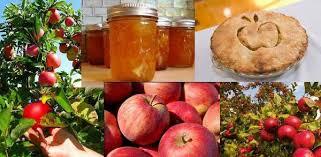 Яблоки, шарлотка, баночки с повидлом - фотоколлаж