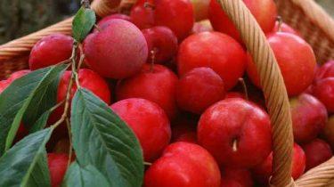 Райские яблоки для компота фото