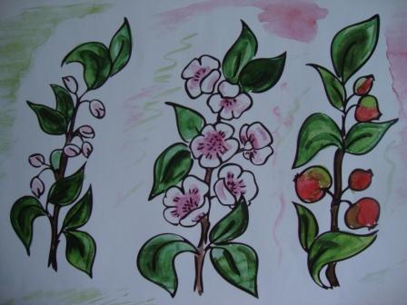 Цветы и плоды яблони для рассказа Яблоко